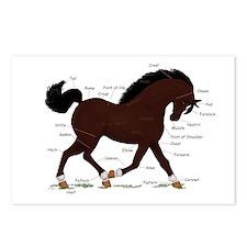 Dark Brown Pony Socks Anatomy Postcards (Package o