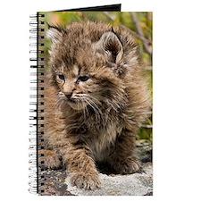 Bobcat Kitten Journal