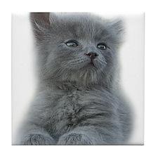 Grey Kitten Tile Coaster