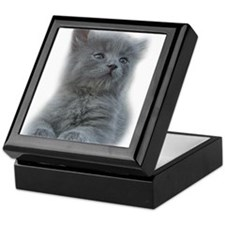 Grey Kitten Keepsake Box