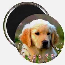 Austin, Retriever Puppy Magnet