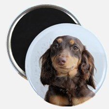Long Hair Doxie Magnet