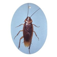 Urban Cockroach Oval Ornament