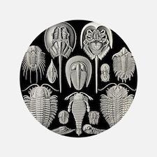"Trilobite 3.5"" Button"