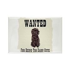 Affenpinscher Wanted Poster Rectangle Magnet