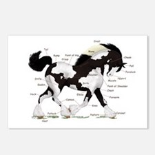 Black Gypsy Horse Anatomy Postcards (Package of 8)