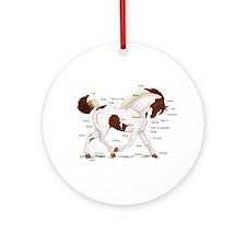 Chestnut Skewbald Horse Anatomy Ornament (Round)