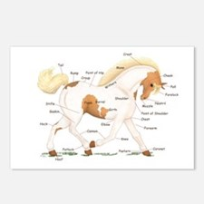 Palomino Skewbald Anatomy Chart Postcards (Package