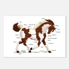 Chestnut Tobiano Horse Anatomy Postcards (Package