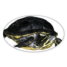 Turtle Oval Decal