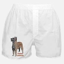 Belgian Laekenois portrait Boxer Shorts