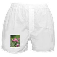 Pink Rose, Boxer Shorts