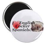 Harry English Cocker Spaniel Magnet