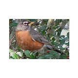 Birds robin Single