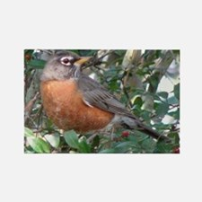 Robin Redbreast Rectangle Magnet