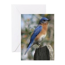 Eastern Bluebird Greeting Cards (Pk of 20)