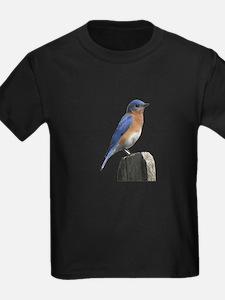 Eastern Bluebird T