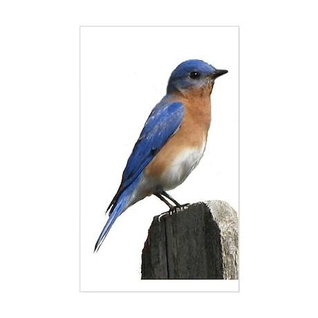 Eastern Bluebird Rectangle Sticker