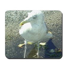 Portsmouth NH Seagull Mousepad