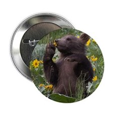 Grizzly Bear Cub Button