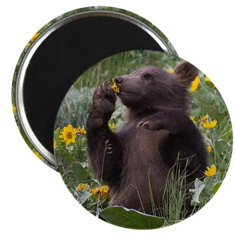 """Grizzly Bear Cub 2.25"""" Magnet (10 pack)"""