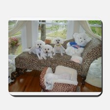 BICHONS AND A BEAR MOUSEPAD