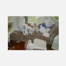 BICHONS AND A BEAR RECTANGLE MAGNET