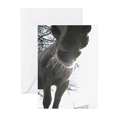 Happy Horse Nose Greeting Cards (Pk of 10)