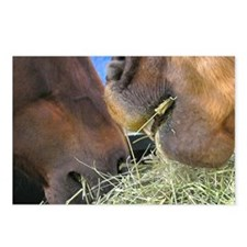 Two Brown Horses Chow Down Postcards (Package of 8