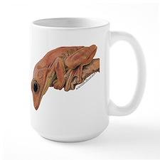 Mugwith South American Tree Frog