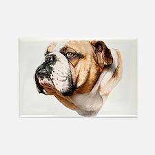 Bulldog Bust Rectangle Magnet