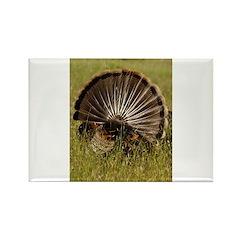 Turkey Fan Rectangle Magnet