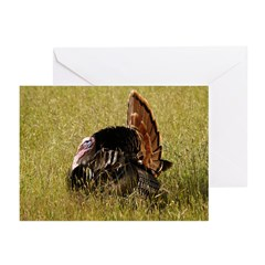 Big Tom Turkey Greeting Cards (Pk of 20)