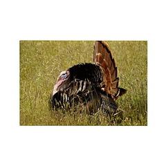 Big Tom Turkey Rectangle Magnet (100 pack)