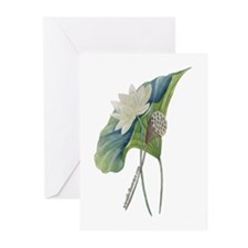 Greeting Cards (Pk of 10) American Lotus Botanical