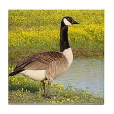 Canadian Goose Wildlife Tile Coaster