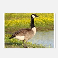 Canadian Goose Wildlife Postcards (Package of 8)