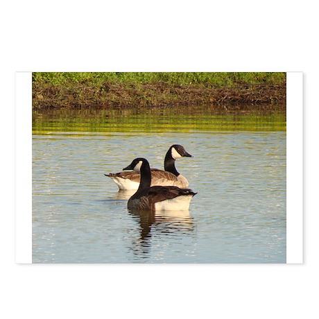 Wildlife Postcards (Package of 8)