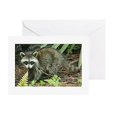 Raccoon Greeting Cards (Pk of 10)