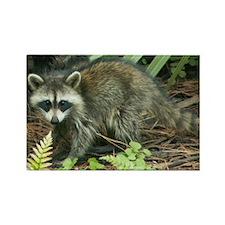 Raccoon Magnet (10 pack)