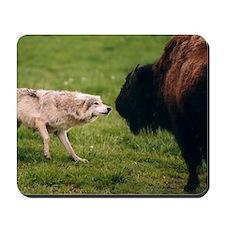 Wolf confrontation Mousepad