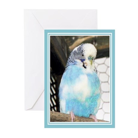...Budgie... Greeting Cards (Pk of 10)