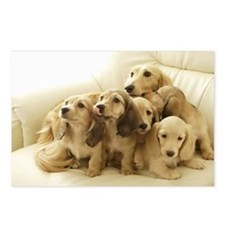 Longhair Dachshunds Postcards (Package of 8)