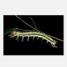 Dudusa Caterpillar - Taiwan, 8 Postcards