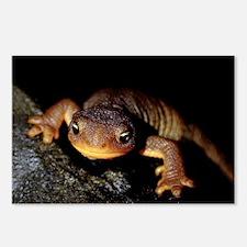 Rough-Skinned Newt - Oregon, 8 Postcards