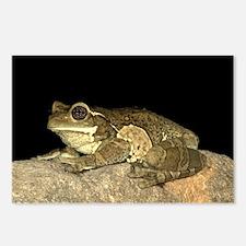Frog - Costa Rica, 8 Postcards