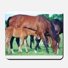 Mares and foals grazing Mousepad