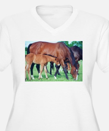 Mares and foals grazing T-Shirt
