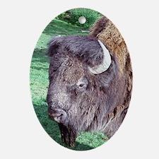 Buffalo Head on Green Keepsake (Oval)