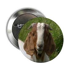 """Goats 2.25"""" Button"""